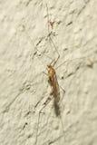 Mosquito - Disease Control Stock Image