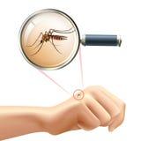 mosquito disponível ilustração royalty free