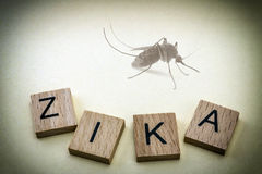 Mosquito do tigre, causando o vírus de Zika Imagens de Stock Royalty Free