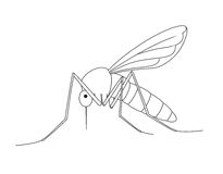 Mosquito Drawing Stock Image