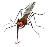 Mosquito Drinking Blood. Illustration of mosquito stinging and drinking blood Stock Photography