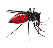 Mosquito drinks blood  on white background. Stock Photos