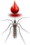 Mosquito and drop of blood Stock Photography