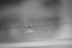 Mosquito en el piso imagenes de archivo