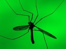 Mosquito en fondo verde Imágenes de archivo libres de regalías