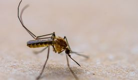 Mosquito is on the floor stock photo