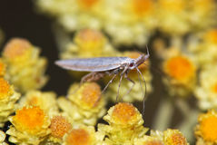 Mosquito on flower Stock Photo