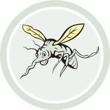 Mosquito Flying Front View Cartoon Royalty Free Stock Image