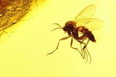 Mosquito fungoso 02 Fotografía de archivo libre de regalías
