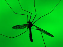 Mosquito on green background. Transparent silhouette of a mosquito closeup against a green background Royalty Free Stock Images