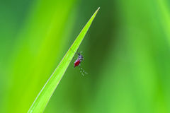Mosquito on green grass Stock Photos
