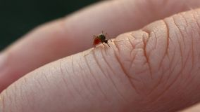 Mosquito on human finger Stock Photography