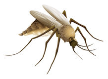 Mosquito. Illustration of the big mosquito Royalty Free Stock Photography
