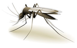 Mosquito. Illustration of mosquito - dangerous insect Royalty Free Stock Image