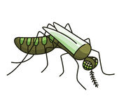 Mosquito Royalty Free Stock Photography