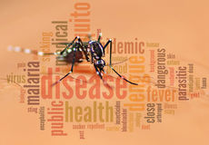 Mosquito and info. Aedes mosquito blend with info text Stock Photography