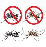 Mosquito isolado editável sob o círculo vermelho Vírus de Zika Vírus de Zika do bebê Conceito alerta da manifestação Fotografia de Stock