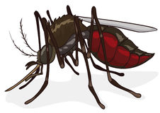 Mosquito Isolated in Cartoon Style, Vector Illustration. Female mosquito with its abdomen full of blood in cartoon style isolated Royalty Free Stock Photo