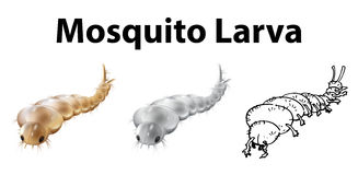 Mosquito larva in three sketches. Illustration Stock Photography