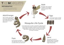 Mosquito Life Cycle stock illustration