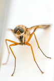 Mosquito stock photo