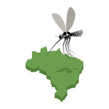 Mosquito and  map of Brazil. Zika virus in Brazil. Mosquito atta Stock Photo