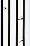 Mosquito muerto por el asesino del mosquito Imagen de archivo libre de regalías