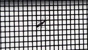 Mosquito na rede filme