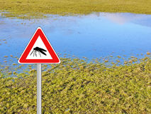 Mosquito pest high water stock images