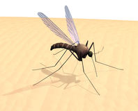 Mosquito on Skin Royalty Free Stock Photos