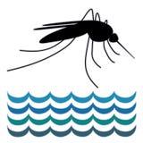 Mosquito, Standing Water Stock Image