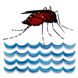 Mosquito, Standing Water Stock Images