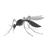Mosquito with stinger isolated on white background. Zika virus. Stock Images