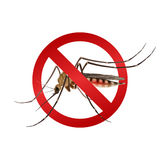 Mosquito stop sign. Realistic mosquito in red stop sign epidemic virus prevention concept vector illustration Stock Photography