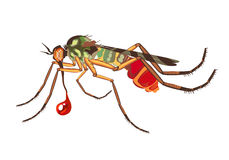 The mosquito sucks blood Royalty Free Stock Photos