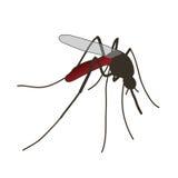 mosquito un mosquito realista Fotografía de archivo libre de regalías