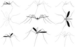 Mosquito Vector 01 Royalty Free Stock Image