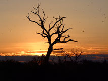 Mosquitoe sunset at Chobe National Park (Botswana) Royalty Free Stock Photos