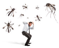 Mosquitoes attack Stock Photo