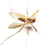 Mosquitoes die Stock Image