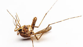 Mosquitoes die Stock Photography