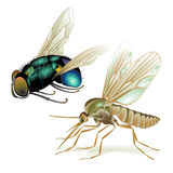 Mosquitoes and flies Royalty Free Stock Photos