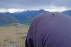 Mosquitoes of Ivvavik National Park Royalty Free Stock Photo