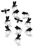 Mosquitoes Royalty Free Stock Photos