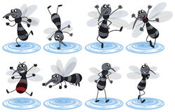 Mosquitos in different actions Royalty Free Stock Photo