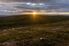 Mosquitos en la sol en la puesta del sol en la tundra, Finnmark, Noruega Foto de archivo libre de regalías