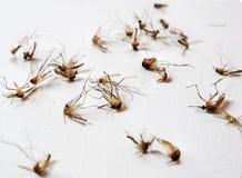 Mosquitos inoperantes Fotos de Stock