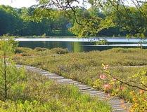 Moss湖自然保护区 免版税库存图片