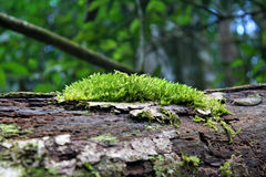 Moss Royalty Free Stock Images