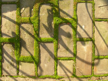 Moss. Pavements where the land covered with moss Stock Photography